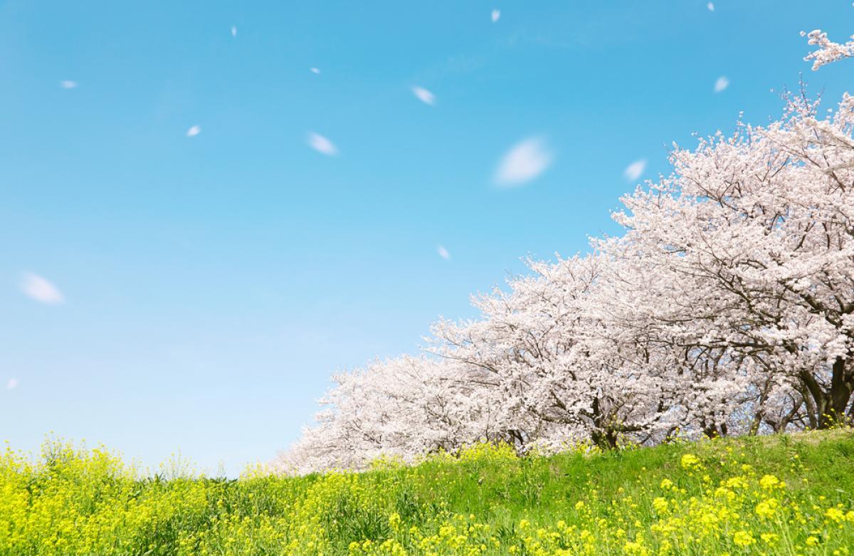 西舘 崇 (Takashi NISHITATE) - 合意に達しない熟議の価値 : 原子力 ...