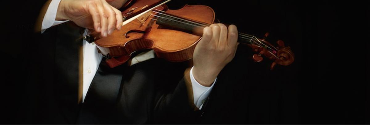 バイオリン 澤 和樹