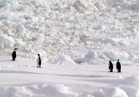 ペンギン の 島 クジラ の 巣