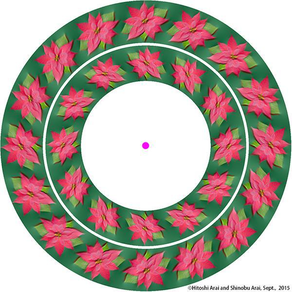 ポインセチアの浮遊錯視1