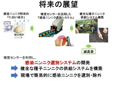 佐賀大学 上野大介 農 分析 異臭 ニンニク 線虫