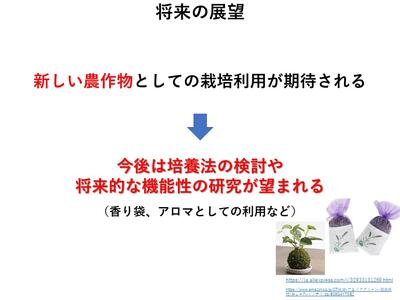 佐賀大 上野 藻類 スミレモ におい 匂い 臭い ニオイ